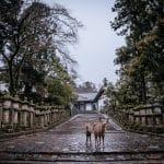 Nara o la ciudad de los bambis
